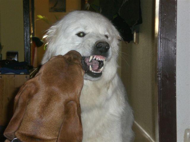 Seminar-Aggressiver-Hund