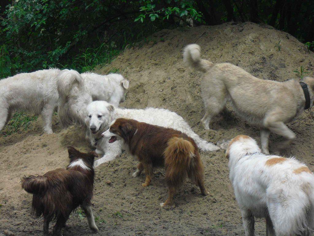 DIFT-Abendseminare/ Workshops/ Online-Seminare - Mehrhundehaltung