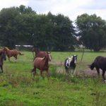 Pferdephysiotherapeut