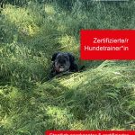 Zertifizierter Hundetrainer - alle Infos