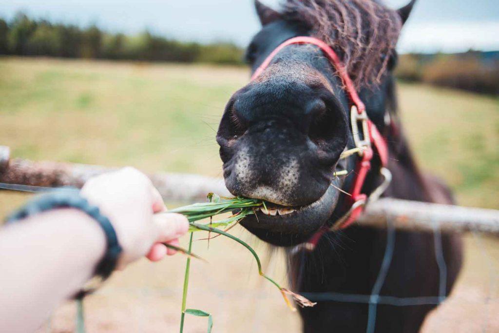 Tierernaehrungsfachberater Pferd