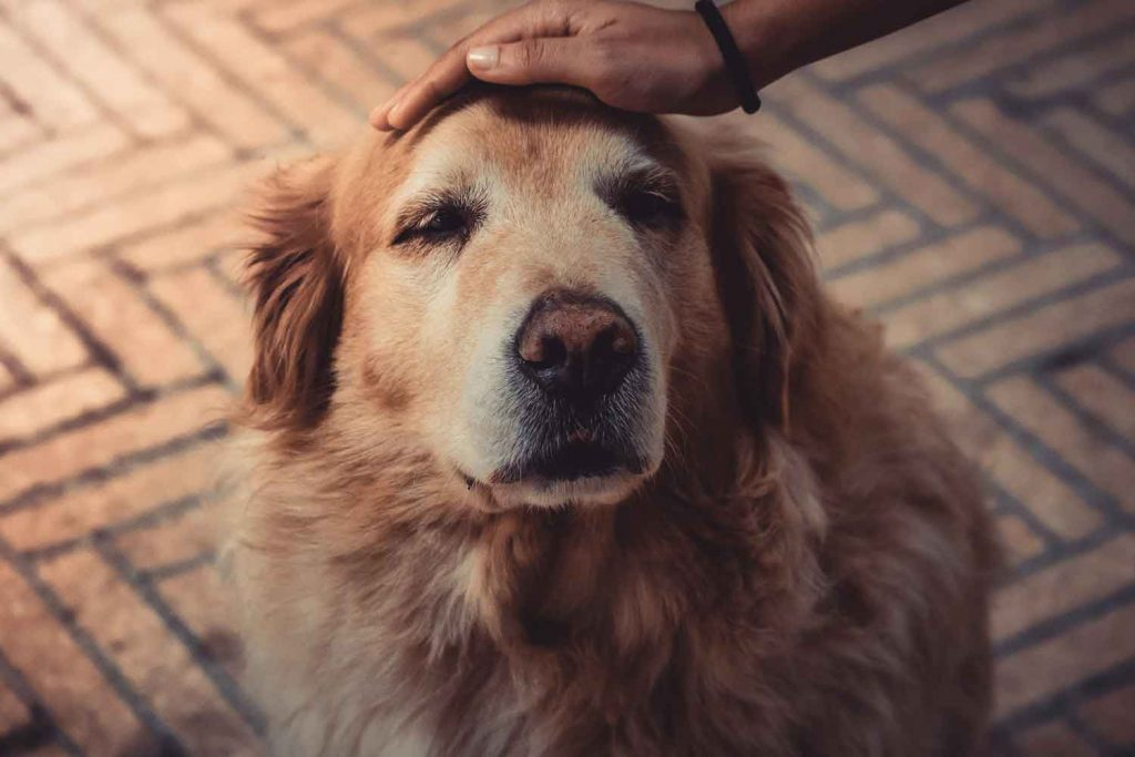 Seminar-Hunde-Senioren